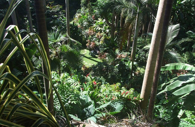closer view of the Huntes gardens in Barbados