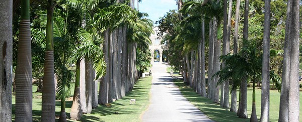 the narrow road among the trees in Barbados